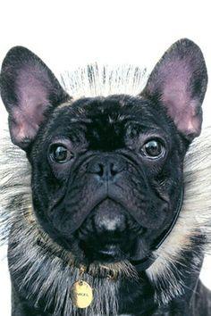Marcel - the Nars iconic dog.