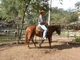 Boogie - 11 year old, 14.2 h BLM mustang gelding. Trained western. Adoption fee $750