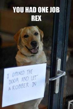 Cachorro da zueira. Kkkkkkk