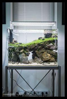 175 best aqua zoo images in 2018 fish tanks planted aquarium