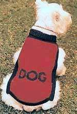 Lowchens of Australia ~ Pattern for a knitted jacket for your clipped-off Lowchen Knitted Dog Sweater Pattern, Knit Dog Sweater, Knitted Coat, Dog Pattern, Dog Sweaters, Sweaters Knitted, Sweater Patterns, Free Pattern, Dog Jumpers