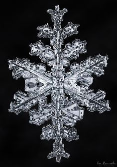 Gallery of of the best Snowflake Images Snowflake Photography, Macro Photography, Fine Art Photography, Crystal Snowflakes, Real Snowflakes, Snowflake Images, Ice Crystals, Snow And Ice, Ice Queen
