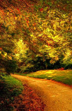 """An evening walk"" by Amy V. Miller on Flickr ~ An evening walk in Indiana amongst the autumn foliage"