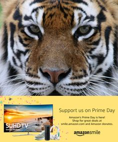Amazon's Prime Day is here!  Deals started at 9:00 pm tonight & runs through July 11. Prime Day is one of the biggest shopping days of the year.When you #StartWithaSmile on #PrimeDay, Amazon donates to Big Cat Rescue. Shop for great deals at smile.amazon.com/ch/59-3330495