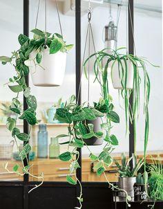 Les plantes suspendues égayeront votre intérieur ! #décoration