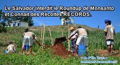 Le Salvador, pays d'Amérique Centrale, a interdit les produits phytosanitaires des grandes multinationales semencières, comme Monsanto. Le Salvador a en effet décidé de mener sa propre révolution agricole. Objectif : favoriser la culture des semences locales.  Découvrez l'astuce ici : http://www.comment-economiser.fr/salvador-interdit-roundup-recoltes.html?utm_content=buffer46316&utm_medium=social&utm_source=pinterest.com&utm_campaign=buffer