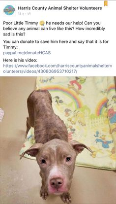 1/5/17 PLEASE SHARE TIMMY!!! HE NEEDS OUR HELP GETTING OUT ALIVE! /ij  https://m.facebook.com/story.php?story_fbid=430854563705456&substory_index=0&id=388243544633225&__tn__=%2As