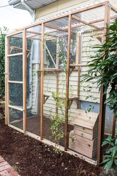 Want to let your cats outdoors, but keep them protected? Check out these tips and advice for building a catio. Diy Cat Enclosure, Outdoor Cat Enclosure, Reptile Enclosure, Cage Chat, Chesire Cat, Cat Cages, Cat Window, Outdoor Cats, Catio