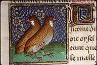 Perdrix Bartholomeus Anglicus