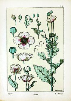 Original 1896 Grasset Art Nouveau Pochoir Floral prints For Sale