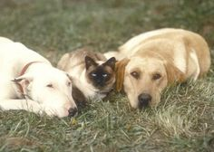 The stars and protagonists of the film are Luath, a young Labrador Retriever, Tao, a Siamese cat and Bodger an elderly Bulldog. Luath is played by Rink, Sym Cat plays Tao and a female Muffy plays the male dog Bodger. The Incredible Journey was remade as Homeward Bound: The Incredible Journey in 1993.