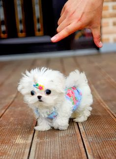 6 Adorable and funny dressed up pets, aww look at this sweetie :)