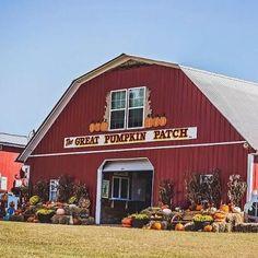 The Great Pumpkin Patch in Hayden, ALcountryliving The Great Pumpkin Patch, Best Pumpkin Patches, Pumpkin Farm, Corn Maze, Autumn Scenery, Down On The Farm, Fall Pumpkins, Alabama, Happy Halloween