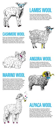 Know your Wools and Fibres Chart  . Remember Rabbits produce Angora wool and Angora goats produce Mohair |