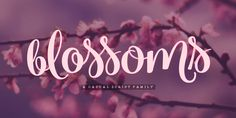 Blossoms Font: Blossoms is a fresh connected script family of four weights and a pack of Extras. It's packed with Contextual Alternates and Standard Lig. Graphic Design Layouts, Modern Graphic Design, Layout Design, Family Vector, Calligraphy Fonts, Premium Fonts, Font Family, Cool Fonts, Creative Design