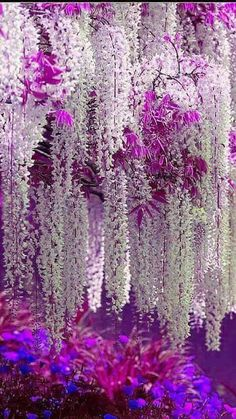 Gardens Discover The beauty of Wisteria. Exotic Flowers, Amazing Flowers, Beautiful Flowers, Beautiful Pictures, Beautiful Nature Wallpaper, Beautiful Landscapes, Beautiful Gardens, Wisteria Tree, White Wisteria