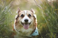 © Anthony Helton, Purple Collar Pet Photography