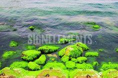 Natural green moss at beach rock with blue sea at Ly Son island, vietnam