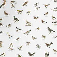 Den vackra Georg digital tapet är en del i Sandbergs digitala kollektion där traditionellt hantverk möter modern teknologi. Fågelmönstret kommer från boken Svenska Foglar och är handmålat av de tre finska bröderna Magnus, Wilhelm och Ferdinand von Wright. Tack vare den digitala tekniken har det blivit möjligt att skapa fler fåglar samt återge alla färger och detaljer precis så som originalen ser ut. Hela fågelmönstret levereras på en rulle och är rapporterbart i sidled.
