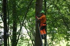 Sicher Totholz fällen: Das Gefahrenpotenzial bei Waldarbeiten in totholzreichen Beständen ist erhöht. Outdoor Power Equipment, Woodland Forest, Garden Tools
