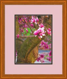 Magenta Magnolia 2 Framed Print By Shelly Weingart