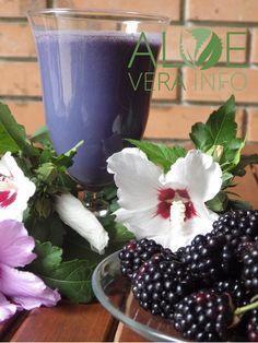 Forever Aloe, Aloe Vera, Blackberry, Table Decorations, Fruit, Shake, Home Decor, Smoothie, Decoration Home