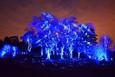 Holiday Tree Light Show Illumination at Morton Arboretum - YouTube
