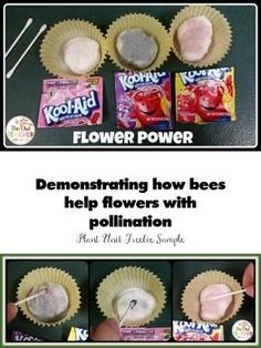 Demonstrating how bees help flowers with pollination! FREE lesson!