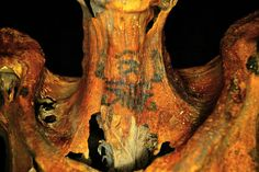 A bioarchaeologist studying mummies found in Deir el-Medina, Egypt has discovered a special kind of ancient tattoo. While most Egyptian mummies with tattoos only have patterns of dots and dashes, thos Ornate Tattoo, Intricate Tattoo, Ancient Egyptian Women, Egyptian Art, Ancient Tattoo, Mummified Body, Science Images, Egyptian Mummies, Geometric Patterns