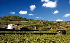 si è svolto a #Donnafugata, a #Pantelleria, una sessione dell'Incontro Mondiale sui #Paesaggi Terrazzati. Questo è il terzo #incontro voluto dall'Alleanza Mondiale che si è costituita nel 2010 tra #istituzioni, #ricercatori e #produttori ai quali sta a cuore il futuro delle aree terrazzate. #vini #passiti #viticoltura