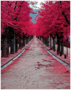 Burgundy Street, Madrid, Spain  photo by rachbourne