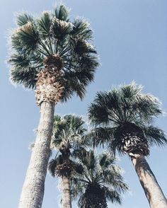 Palm trees. @happilyeverallen. Summer. Sunshine. Fashion. Womens fashion. Ootd. Style. Blogger style. Fashion blogger.