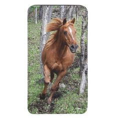 """""""On the Run"""" - Pony Running in Forest Pasture Equine Photo"""