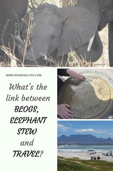What's the link between blogs, elephant stew and travel? #travel #blogging #elephants #safari #explore #travelmemories #historicaltravel #writing #SouthAfrica #internationaltravel #localtravel #flights #boats #tours #tourist #traveler #photos #memories Fox Facts, Elephants Photos, Travel Memories, Photo Essay, Interesting Facts, Great Places, Writers, Storytelling, South Africa