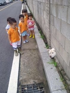 And this Shiba cousin who got stuck trying to tell these kids the truth about Santa.