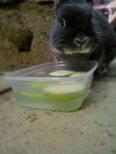 Virikevinkki! Laita matalaan astiaan vettä ja omena-viipaleita. Samalla kun kani tavoittelee herkkupaloja se saa myös extrana nestettä. Mainio juttu esim.helteillä.
