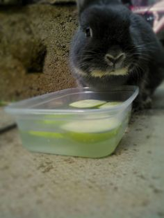 To keep bunny's system in good working order make sure they are eating plenty of hay and drinking plenty of water. If your bunny doesn't appear to be drinking very much try putting thin slices of apple into their water, they will drink the water to get a better grip on the apple :)
