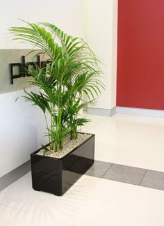 green design indoor plant hire sydney amazing office plants