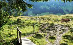 Blick zur Willersalpe beim Aufstieg von Hinterstein, Bad Hindelang
