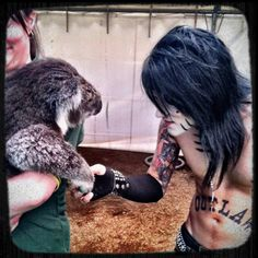 Ashley Purdy shaking a koala bear's hand... Why do all celebrity's seem to have a picture with a koala