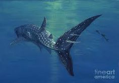 Image result for whale shark graphic