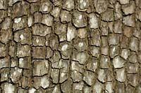 Distressed bark