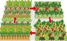 Scheme for a crop rotation - Diy Garden Projects Crop Rotation, Diy Garden Projects, Life Hacks, Gardening, How To Plan, Holiday Decor, Outdoor, Beauty, Trends