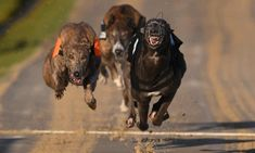 Sport's opponents say it cannot be reformed because of dangerous tracks and problems rehoming retired dogs Singapore Zoo, Brighton And Hove, Brighton England, Dog List, Photos Of The Week, Animal Welfare, Livestock, The Guardian, Charity