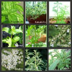 füszerek Herbs, Plants, Garden Styles, Bonsai, Beautiful Gardens