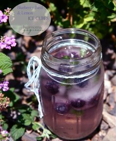 ICE CUBES~ blueberry, basil, and lemon. Add to a glass of water and refresh! #blueberry, #lemon, #basil, #lemonade, #stevia