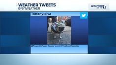 Izzy featured on NY1 Weather. Stay Toasty!