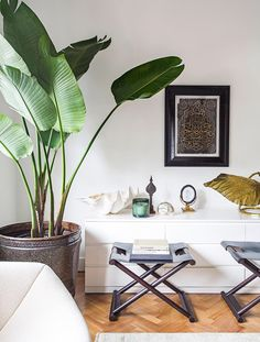 ** An indoor plant will transform your space – and your headspace. Plants are known to purify the air, improve concentration and balance humidity levels, making them a worthy style statemen Tall Indoor Plants, Indoor Trees, Faux Plants, Large Plants, Indoor Planters, Living Room Plants, My Living Room, Small Living, Living Room Decor