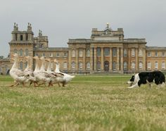 A definite for 2017! BBC Countryfile Live 2016 at Blenheim Palace