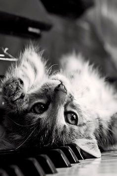 """""""There are two means of refuge from the miseries of life, music and cats."""" --Albert Schweitzer"""